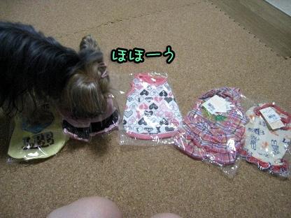 4_20090807144202.jpg