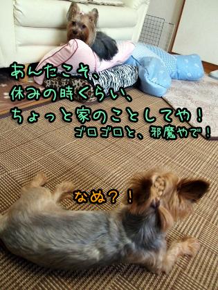 4_20090813183420.jpg