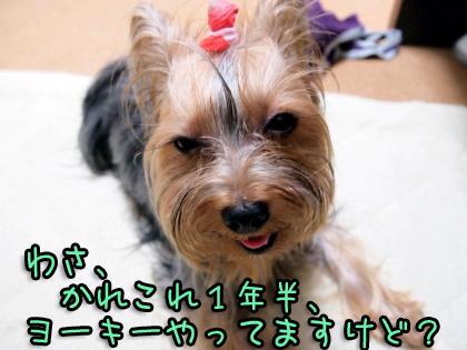 4_20090822194610.jpg