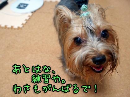 4_20090827204605.jpg