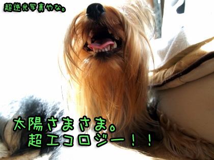 4_20090902134506.jpg