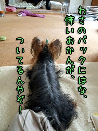 4_20090916204838.jpg