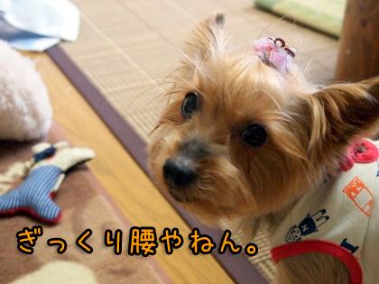4_20090920201138.jpg