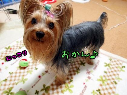 4_20091005175930.jpg