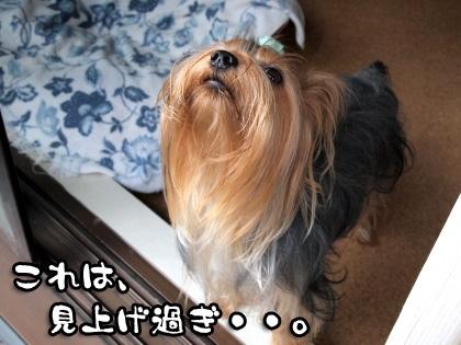 4_20091008192604.jpg