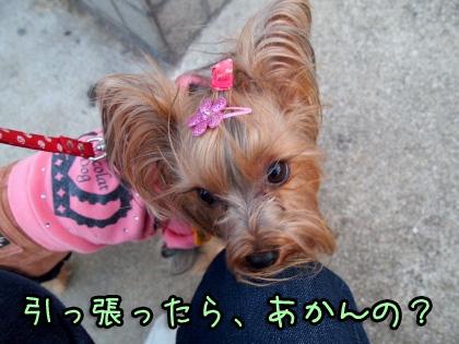 4_20091014170316.jpg