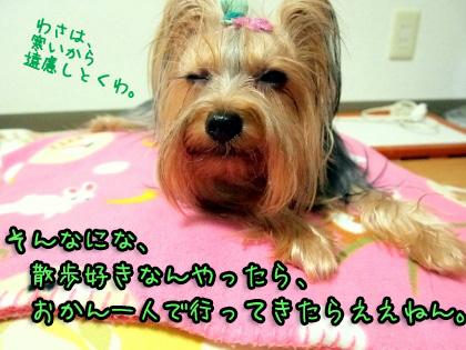 4_20091102181547.jpg
