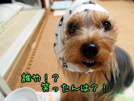 4_20091112190443.jpg