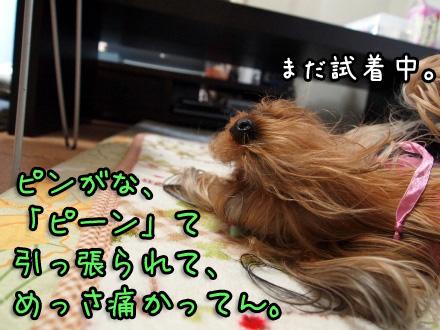 4_20091116191613.jpg