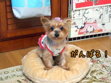 4_20091117193252.jpg
