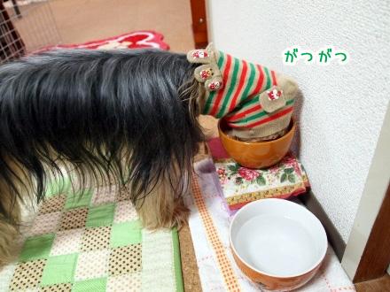 4_20091125190216.jpg