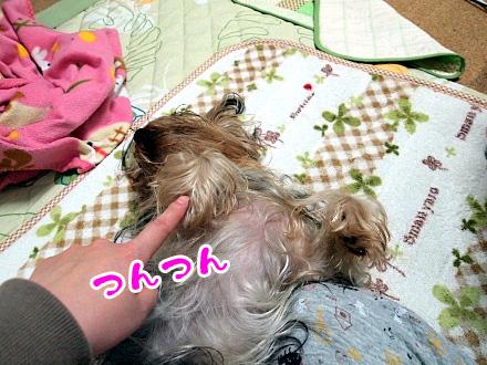4_20091205190850.jpg