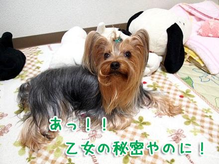 4_20091208200647.jpg