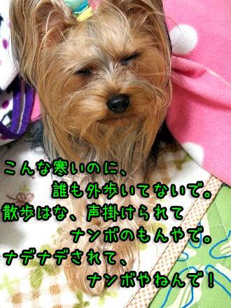 4_20091221194531.jpg