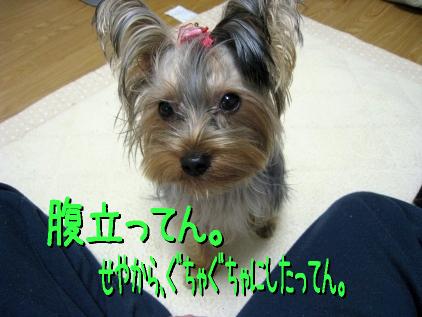 5_20090113195211.jpg