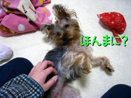 5_20090121124912.jpg