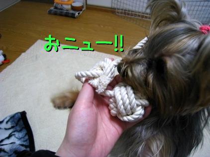 5_20090122201132.jpg