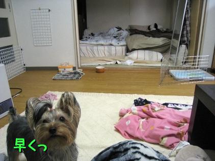 5_20090130195942.jpg