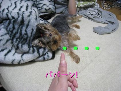 5_20090131194829.jpg
