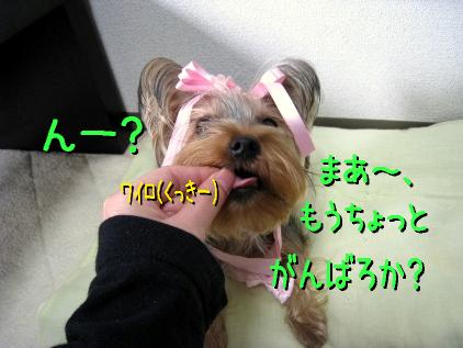 5_20090214164515.jpg