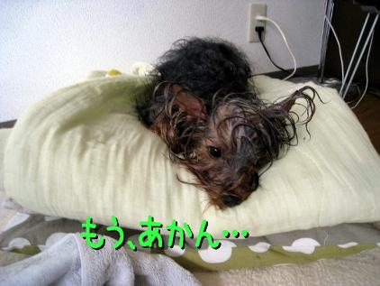 5_20090219195018.jpg