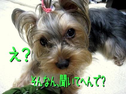 5_20090226194824.jpg