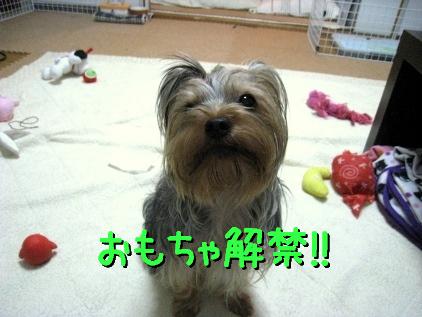 5_20090301113842.jpg