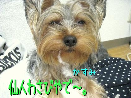 5_20090306193417.jpg