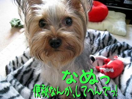 5_20090329174323.jpg