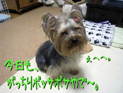 5_20090401174940.jpg