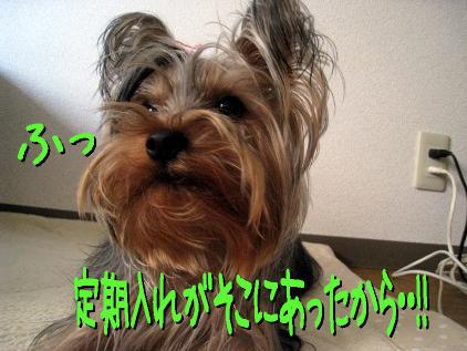 5_20090406203053.jpg