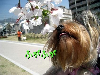 5_20090408154721.jpg