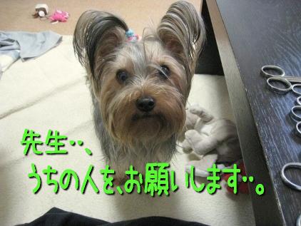 5_20090418165012.jpg