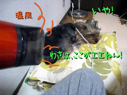 5_20090426143048.jpg