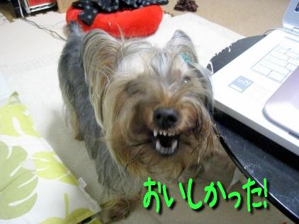 5_20090429194118.jpg