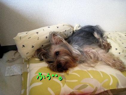 5_20090509175059.jpg
