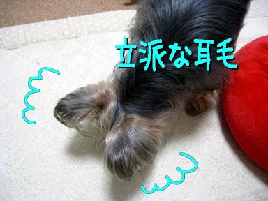 5_20090518170853.jpg