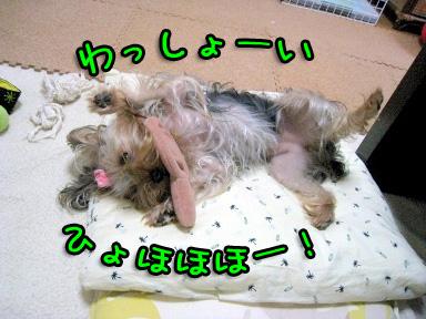 5_20090604185646.jpg