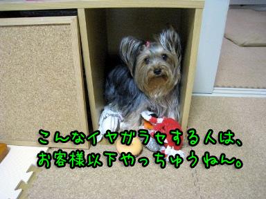 5_20090605202230.jpg