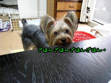 5_20090613183541.jpg