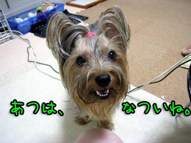 5_20090623194247.jpg