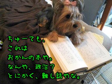 5_20090625202548.jpg