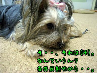 5_20090626195202.jpg