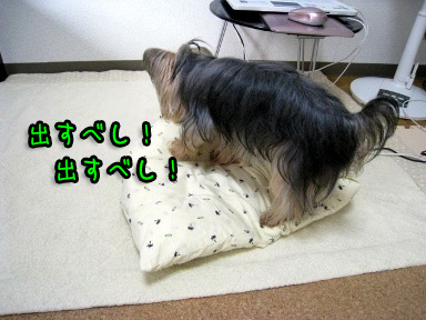 5_20090703193507.jpg