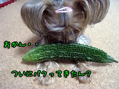 5_20090705144003.jpg