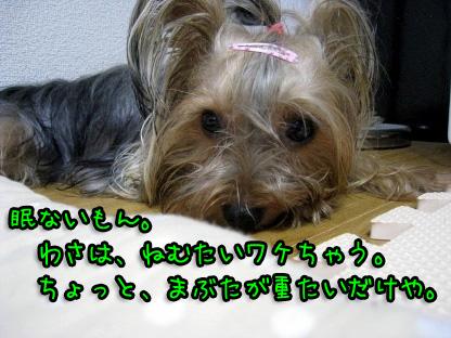5_20090709190405.jpg