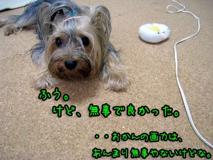 5_20090715090620.jpg