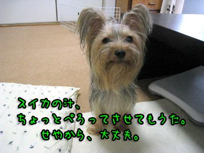 5_20090717193719.jpg
