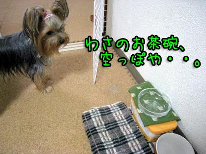 5_20090721195251.jpg