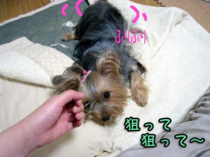 5_20090731145424.jpg